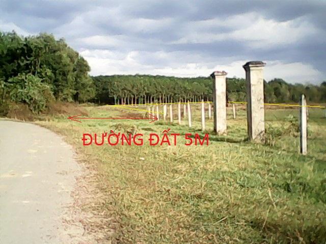 Bán 14.400m2 đất vườn trang trại xã Thái Mỹ Củ Chi giá 120 ngàn/1m2