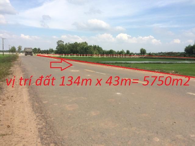 Bán 5.750m2 đất mặt tiền đường tỉnh lộ 7 xã thái mỹ củ chi giá 95 triệu / 1m ngang