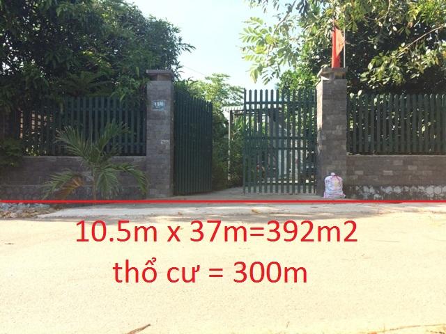 Bán nhà đất thổ cư xã Thái Mỹ -H.Củ Chi – TP.Hồ Chí Minh 10.5m x 37m = 392m2 (300m2 thổ cư)